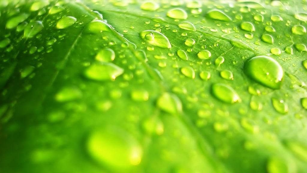 Meaco Water on Leaf